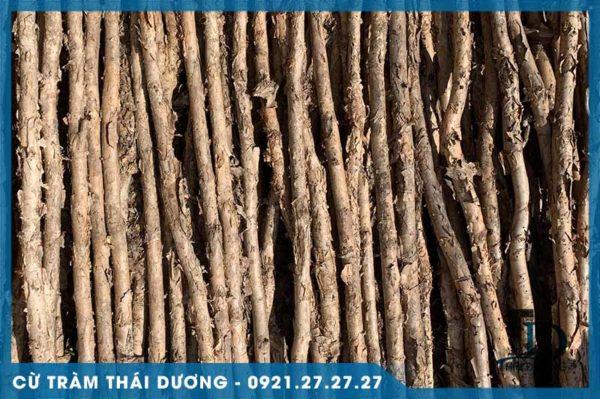 Cừ tràm dài gốc 7-9cm 2