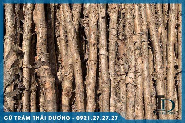 Cừ tràm dài gốc 6-8cm 1